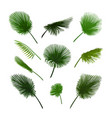 palm leaves set exotic palm leaf vector image