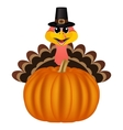 Turkey in Peligrin hat on Thanksgiving Day looks vector image vector image