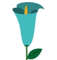 calla lilly flower icon vector image