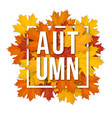 frame with autumn maple leaves vector image vector image
