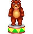 funny brown circus bear cartoon vector image