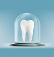 white human tooth under the glass dome vector image vector image