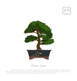 Bonsai tree in pot on white background vector image vector image