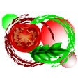 fresh tomatoes vector image vector image
