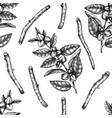 ashwagandha background medicinal plant hand vector image