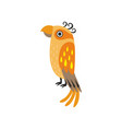 cute orange tropical parrot bird vector image vector image