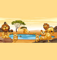 lions living by the pond vector image vector image