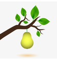 pear and branch of tree with green leaves eps10 vector image