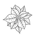 poinsettia isolated christmas flower vector image