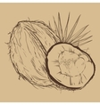 Coconut isolated on vintage background vector image vector image