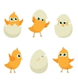 Easter eggs chicks vector image