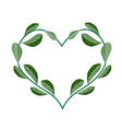 Fresh Evergreen Leaves in A Heart Shape vector image vector image