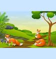 cartoon three a fox enjoying on field vector image vector image