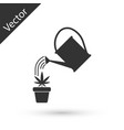 grey watering can sprays water drops above vector image vector image