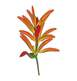 Heliconia flower vector image vector image