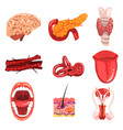 human internal organs sett brain thyroid ear vector image vector image