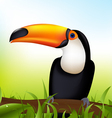toucan cartoon vector image
