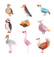 collection of beautiful birds flamingo puffin vector image vector image