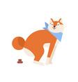 funny akita inu pooping or defecating during walk vector image vector image