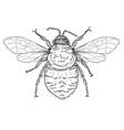 bumble bee line art vector image vector image