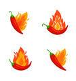 burned chilli peppers vector image