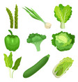flat set of fresh green garden vegetables vector image
