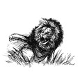 hand sketch a raging lion vector image