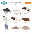 rat breeds icon set flat style isolated on white vector image