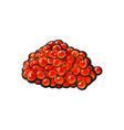 sketch cartoon red salmon caviar vector image vector image
