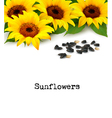 Sunflowers background with sunflower seeds vector image vector image