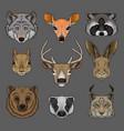 head of wild animals set portrait of wolf doe vector image