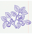 bilberry vector image vector image