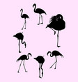 flamingo birds animal gesture silhouette vector image
