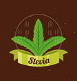 stevia natural sweetener plant and organic product vector image vector image