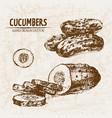 digital detailed line art cucumber vector image