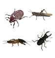 Insects on a white background