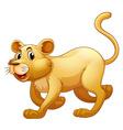 Lion walking alone on whitebackground vector image vector image