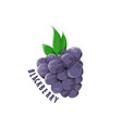 logo icon design blackberry farm vector image