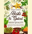 spices and herbs seasonings farm market vector image vector image