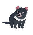 tasmanian devil isolated on white background vector image vector image