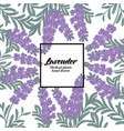 hand drawn background with lavender flowers vector image vector image