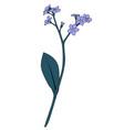 hand drawn flower myosoti vector image vector image