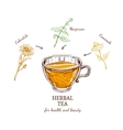 Herbal Tea Recipe Concept vector image vector image