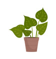 homemade cute home plant in a beautiful colorful vector image vector image