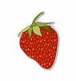 isolated strawberry sticker concept vector image vector image