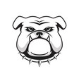 logo bulldog head vector image vector image