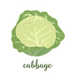 cabbage on white vector image vector image