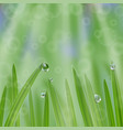 grass in droplets water with sunrays background vector image vector image