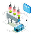 hydroponic system infographic layout vector image vector image