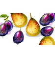 pear and plums fruits watercolor pattern vector image vector image
